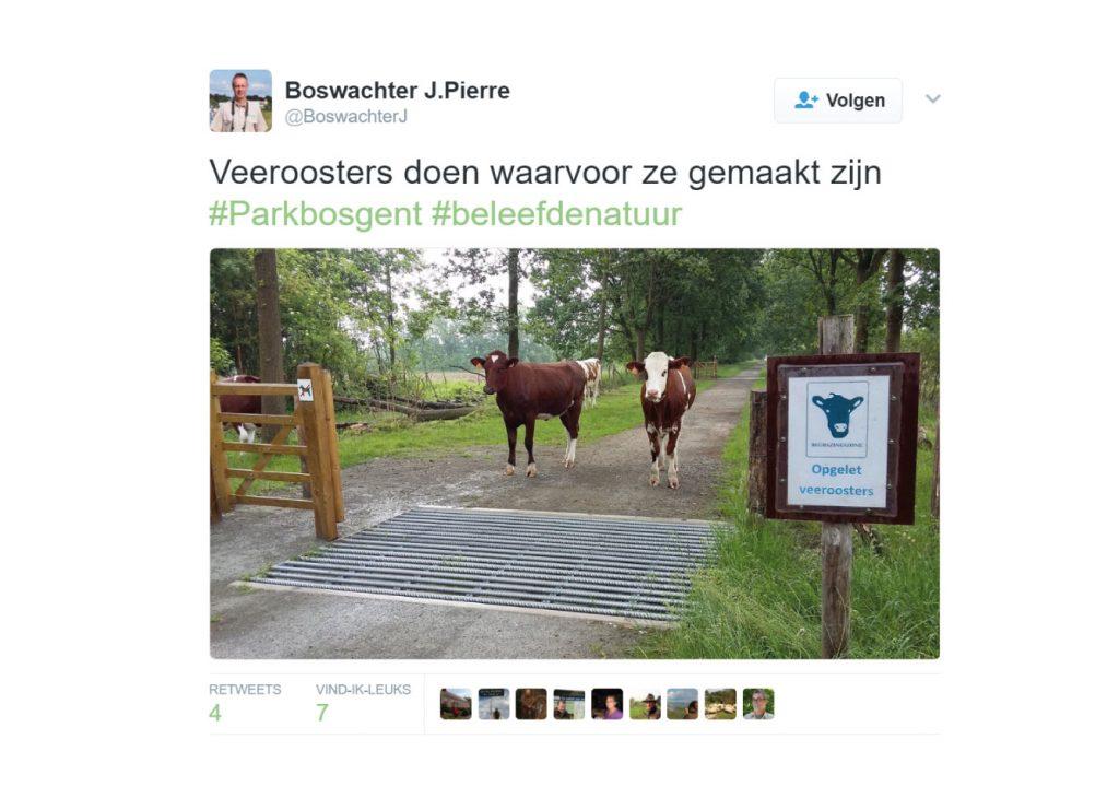 veeroosters-tweet